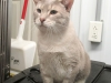 Franklin - Adopted Aug\'13