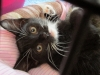 Giselle - Adopted Aug\'13