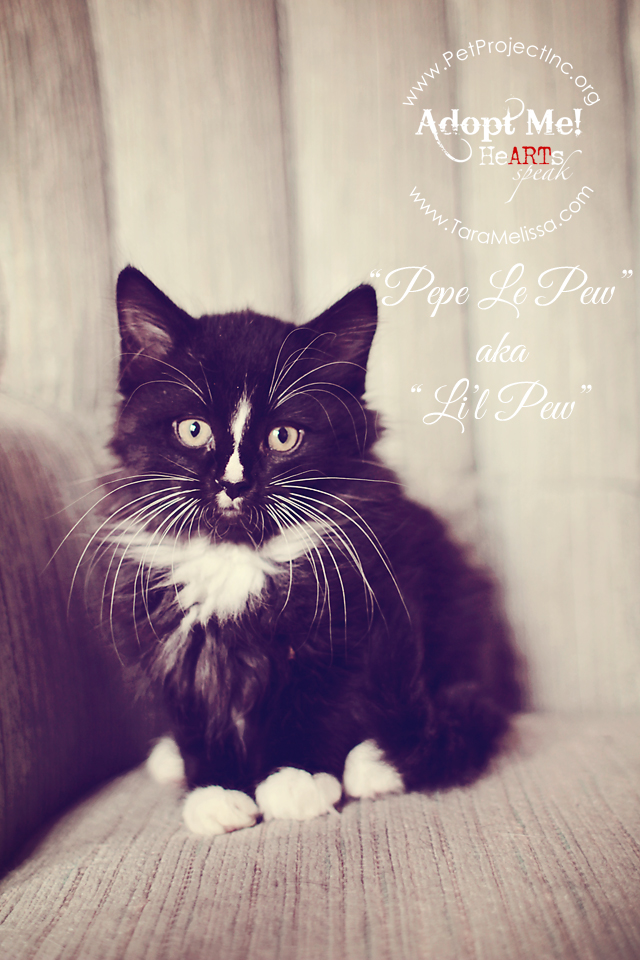 Pepe le Pew  - Adopted December 2012