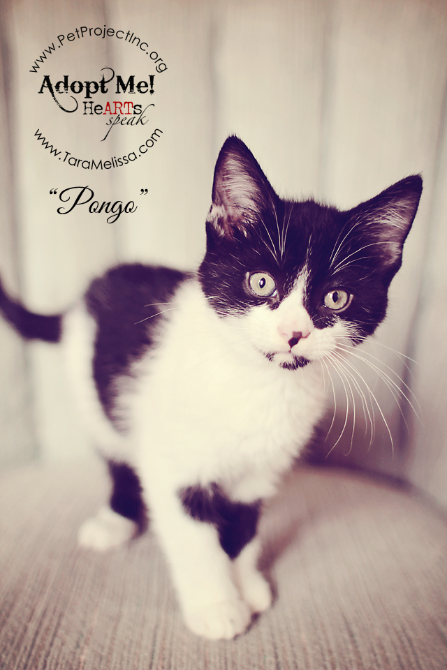 Pongo  - Adopted December 2012