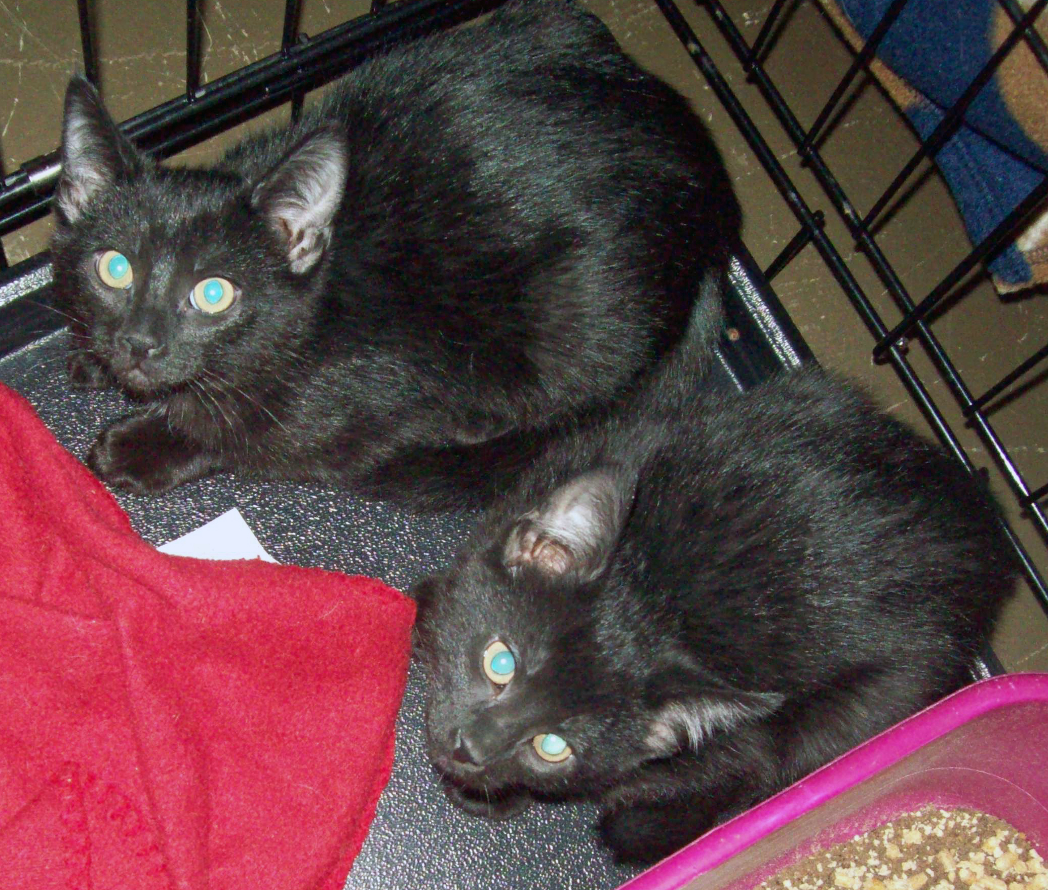Karl and King - Adopted Dec\'13
