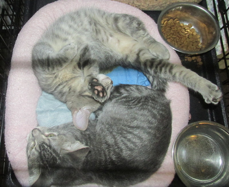 Sasha & Snickers - Adopted Dec\'13