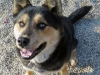 Joey - Adopted Dec\'13