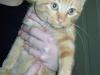 Kringle - Adopted Dec\'13