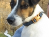 Dasher - Adopted Dec\'13