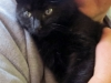 Jellyroll - Adopted Dec\'13
