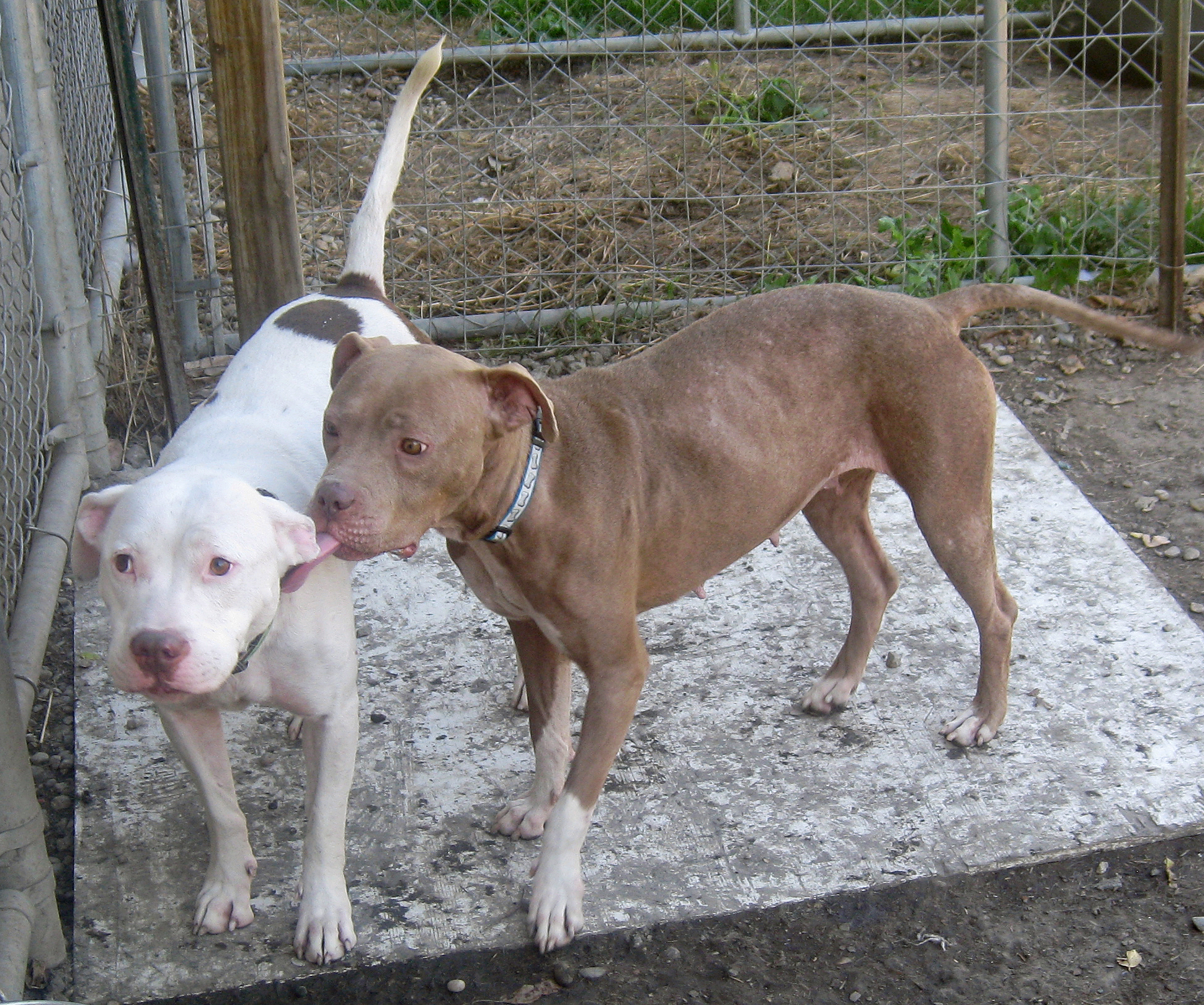 Sugar & Spice - Adopted January 2012