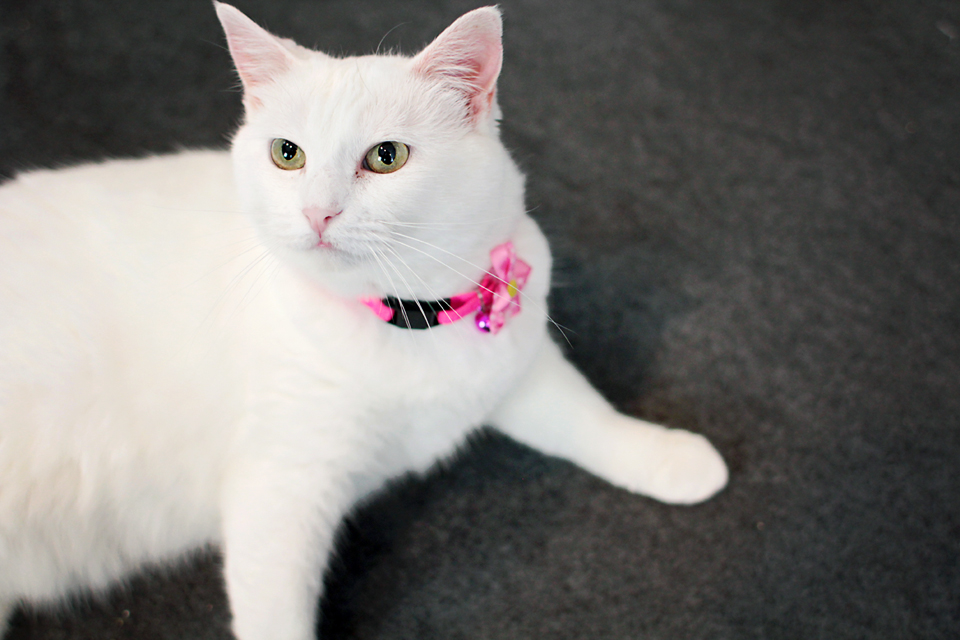 Snow White - Adopted November 2012