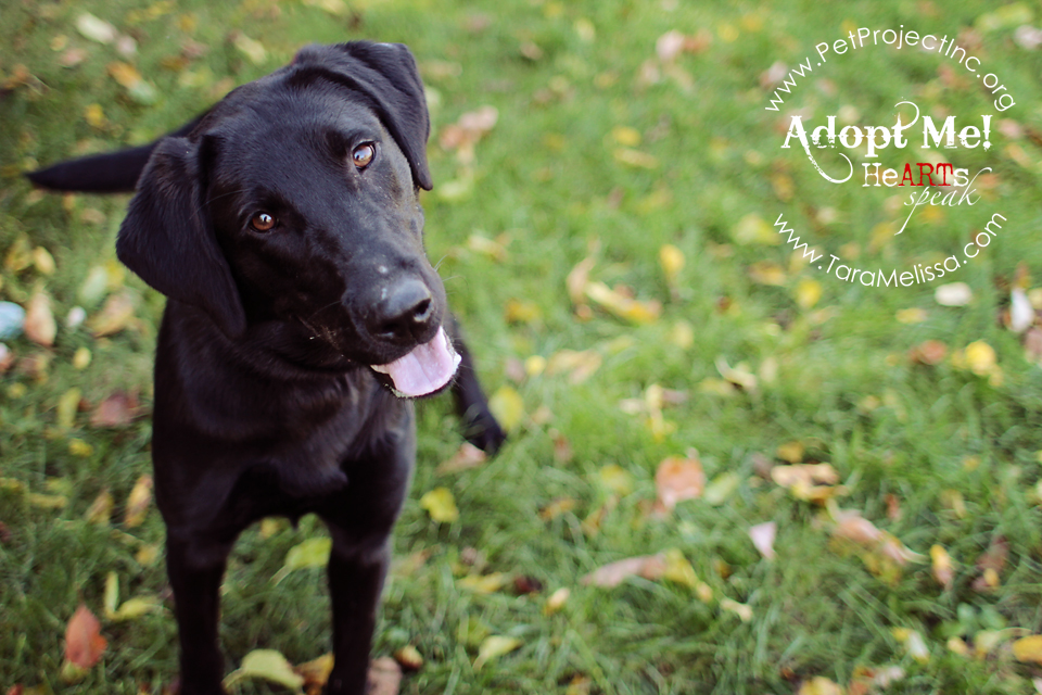 Ebony -  Adopted October 2012