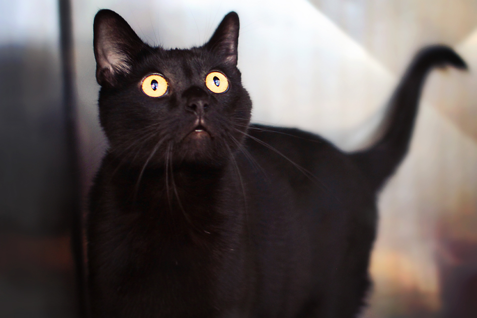 Midnight - Adopted October 2012