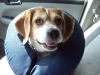 Debbie - Adopted Oct\'13