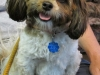 Roxie - Adopted Oct\'13
