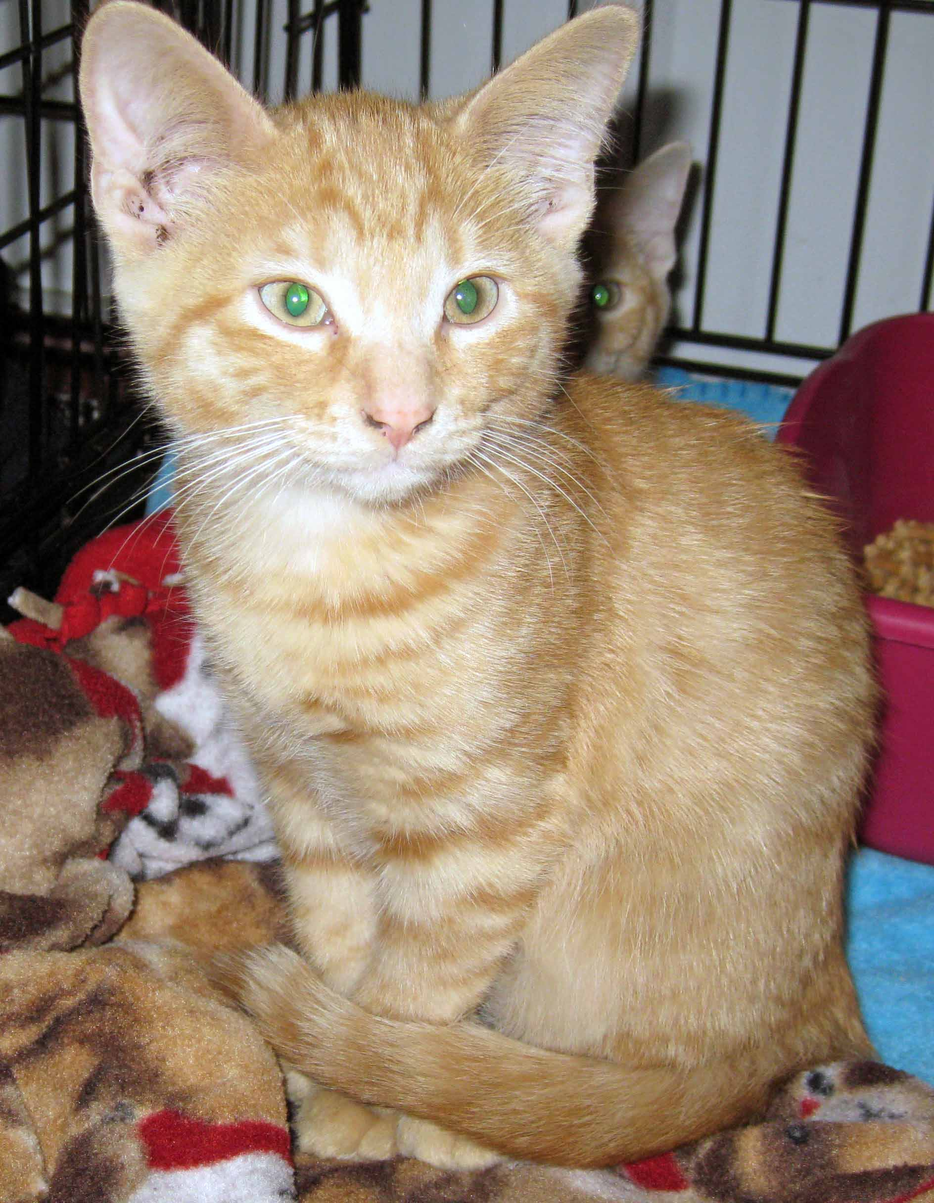 Manny - Adopted September 2012